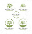willow tree landscape design creative vector image
