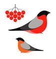 Bullfinch vector image