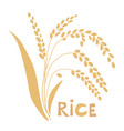 rice plant isolated on vector image vector image