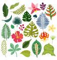 tropical plants elements set vector image vector image