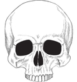 Human skull isolated vector image