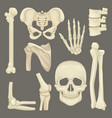 parts of human skeleton skull pelvic girdle vector image