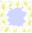 white lily flower border isolated on purple vector image vector image