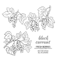 black currant set vector image