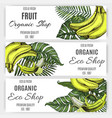 hand drawn banner banana tropical leaf vector image