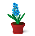 hyacinth vector image vector image