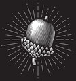 acorn vintage engraved vector image vector image