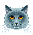 pixel british blue cat face isolated vector image vector image