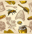 seamless pattern with honey bee hive clover vector image vector image