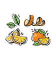 set orange fruits on white background vector image