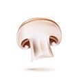 3d champignon mushroom slice realistic icon vector image vector image