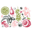 hand drawn culinary nuts collection with branches vector image vector image