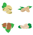 Nuts collection vector image vector image