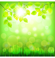 Summer nature background with green foliage vector image vector image