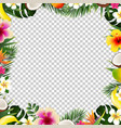 tropical frame isolated vector image vector image