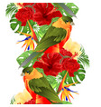 border seamless backgroun tropical bird vector image vector image