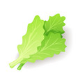 Fresh green salad leaf icon isolated organic