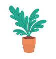 house plant pot isolated icon vector image vector image