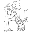 Giraffe eating leaves from the tree vector image
