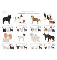 companion and miniature toy dogs collection vector image