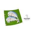 mackerel fresh on banana leaf vector image vector image