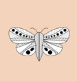 night moth butterfly hand drawn doodle sketch vector image