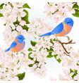 seamless texture thrush small birds bluebirds vector image vector image