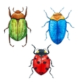 Watercolor bug beetle vector image vector image