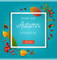 autumn composition with autumn leaves on teal vector image