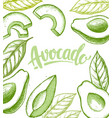 avocado set on white background in sketch style vector image