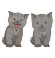 british shorthair breed kittens flat vector image vector image