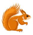 cute orange squirrel vector image