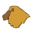 head big lion african powerful fierce vector image vector image