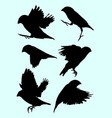 zebra finch birds animal silhouette vector image vector image