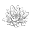 black and white lotus flower vector image vector image