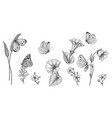 hand drawn monochrome wild flowers and vector image vector image