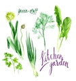 Kitchen garden vector image