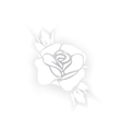 White rose silhouette with shadows on white vector image vector image