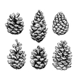 Pine cone set Botanical hand drawn vector image