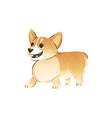 cute welsh corgi pembroke dog or puppy flat vector image vector image