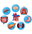 Diagram showing different human parts vector image vector image
