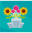 flowers roses and sunflowers in pot garden vector image vector image