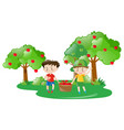 two boys working in apple farm vector image vector image