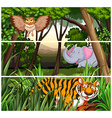 Wildlife in the jungle vector image vector image