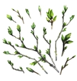 Watercolor spring branches vector image