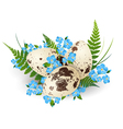 Easter Quail Eggs vector image vector image