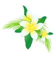 Frangipani Tropic Flowers vector image vector image