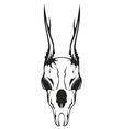 skull roe vector image