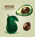 digital detailed color avocado hand drawn vector image