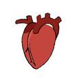 heart human organ healthy anatomy icon vector image